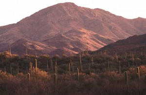 Wasson Peak Saguaro Wilderness Tucson Mountains AZ